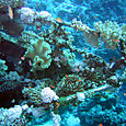 Bow of a shipwreck covered with corals